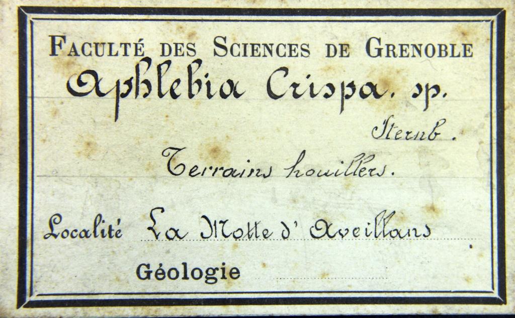 Flore Carbonifère des Alpes Françaises part 2 - Page 3 Img_6317