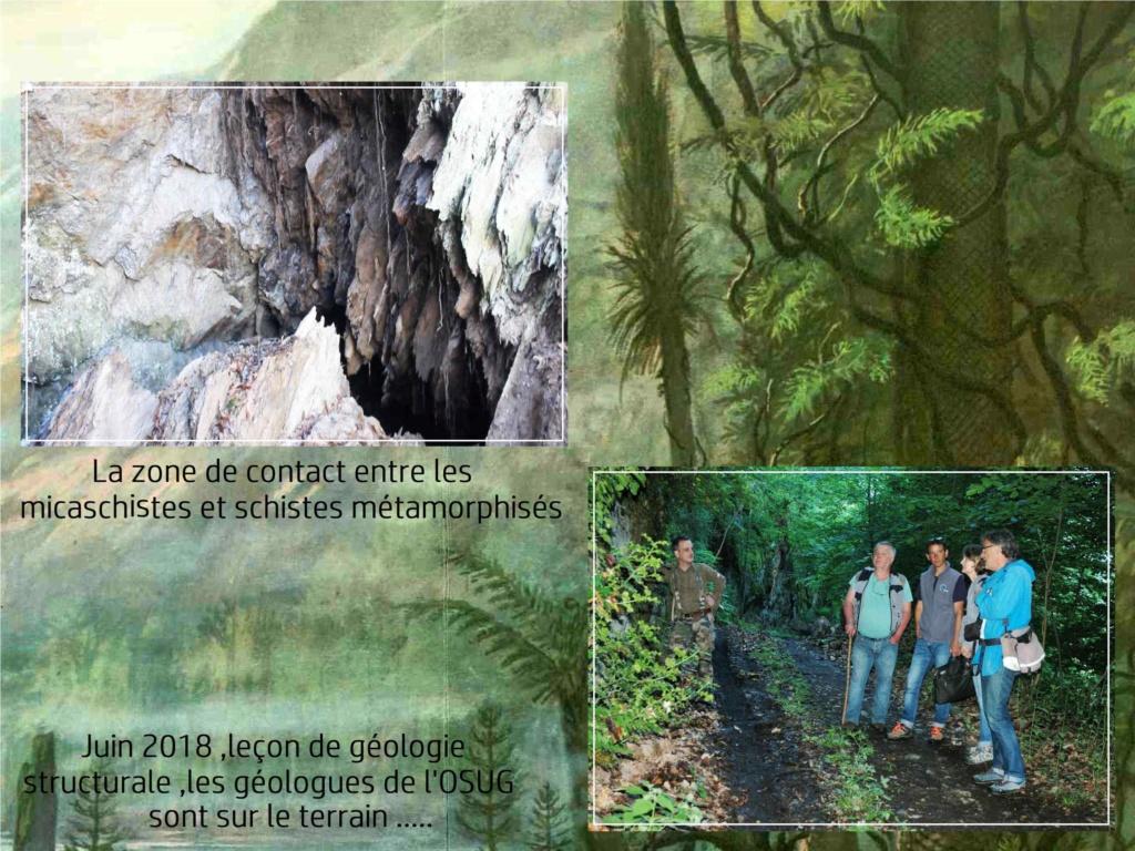 Flore Carbonifère des Alpes Françaises part 2 - Page 3 Journz12