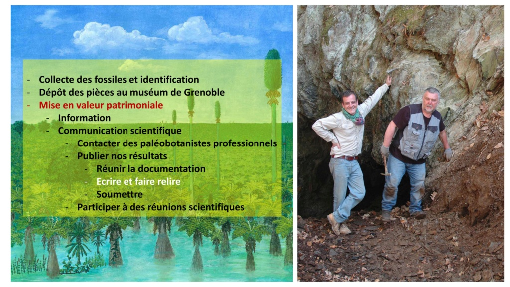 Flore Carbonifère des Alpes Françaises part 2 - Page 3 Jpatri10