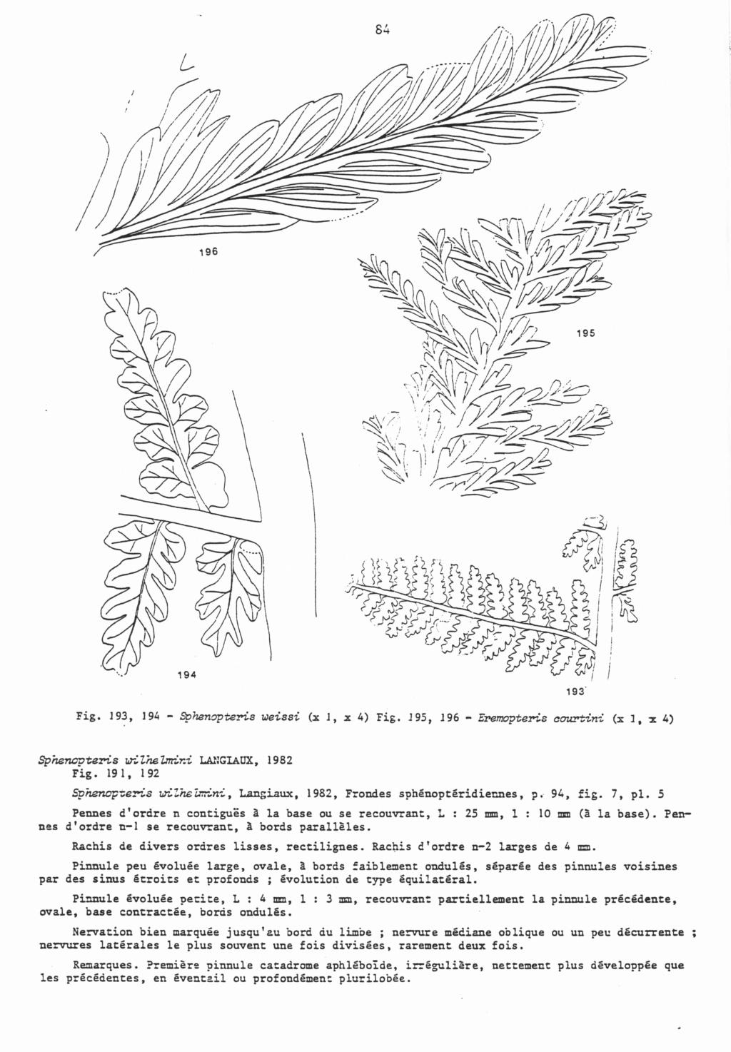 Flore Carbonifère des Alpes Françaises part 2 - Page 4 Langia11