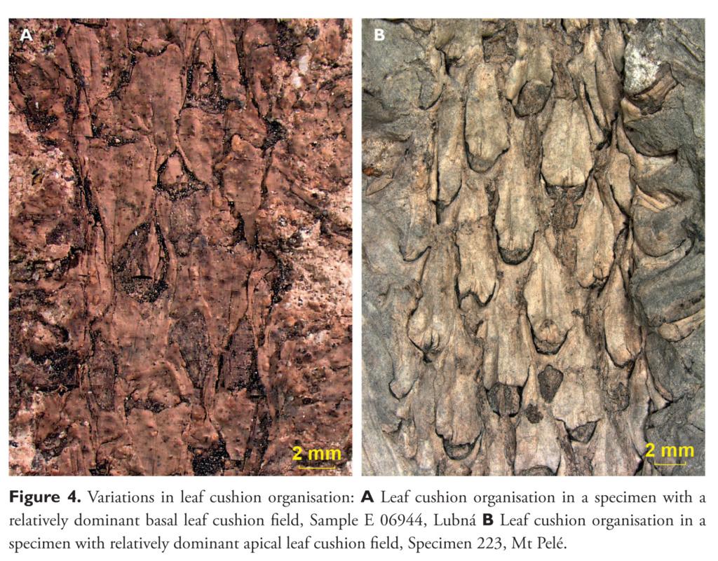 Flore Carbonifère des Alpes Françaises part 2 - Page 3 Van_de10