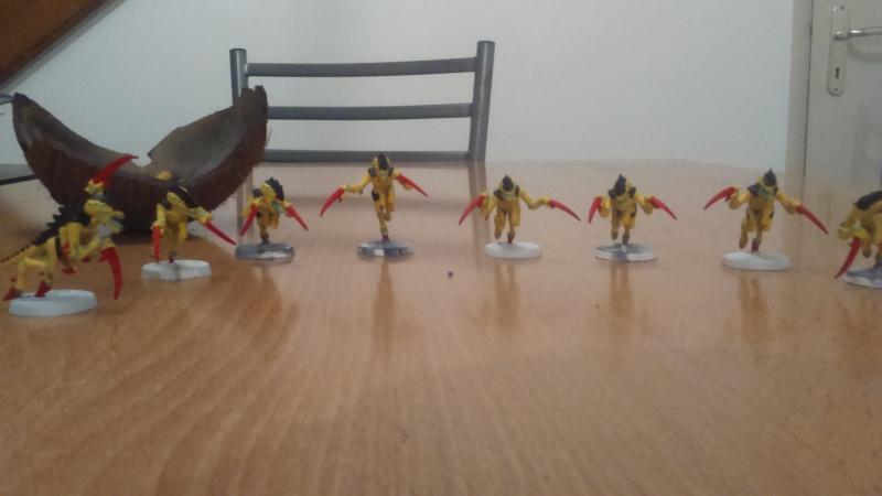 La flotte-ruche Meganeura Dsc_0111
