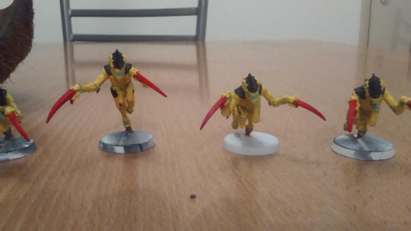La flotte-ruche Meganeura Dsc_0116
