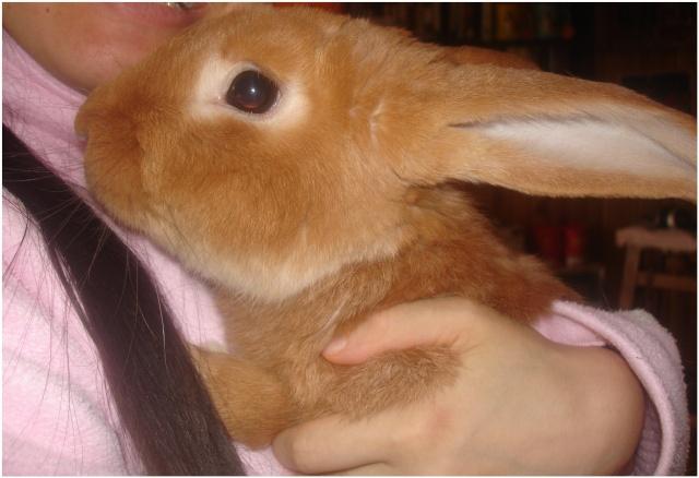 Vos animaux de compagnie / Vos animaux préférés - Page 2 Bunny_10