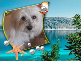 Album photos des bichons - Page 6 Signat10