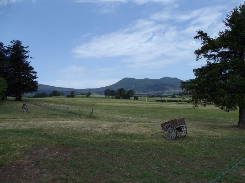 Estivale 2015 en Auvergne - Page 9 Imgp3533