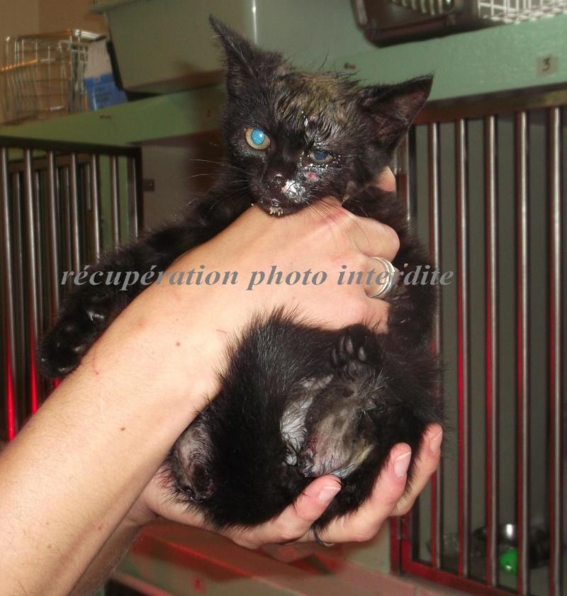 Chaton mâle blessé, à peine 2 mois - Fourrière 44 - délai 12/07/2015 si pas de soins supplémentaires 3f14