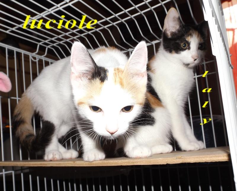 Deux chatonnes 3 mois blanche et tricolore - Fourrière sud 44 - délai 17/08/2015 - Page 2 9f10