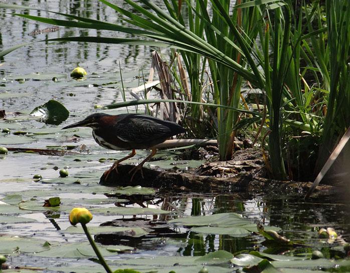 Photos à l'étang Burbank Dsc02420