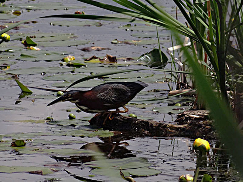 Photos à l'étang Burbank Dsc02421