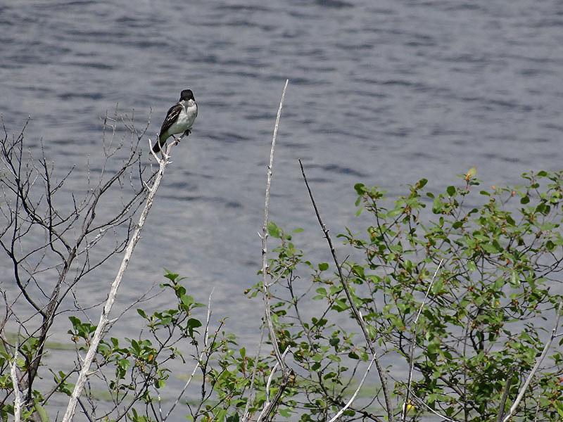 Photos à l'étang Burbank Dsc02423