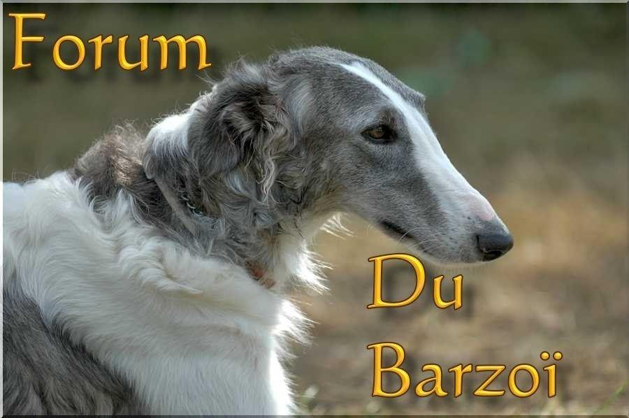 Le Forum du Lévrier Barzoi, tout sur le lévrier barzoi