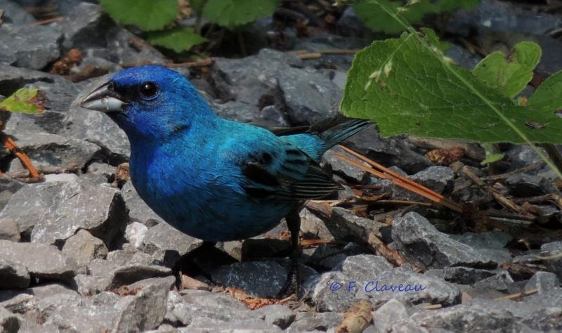 bleu bleu bleu Dscn0110