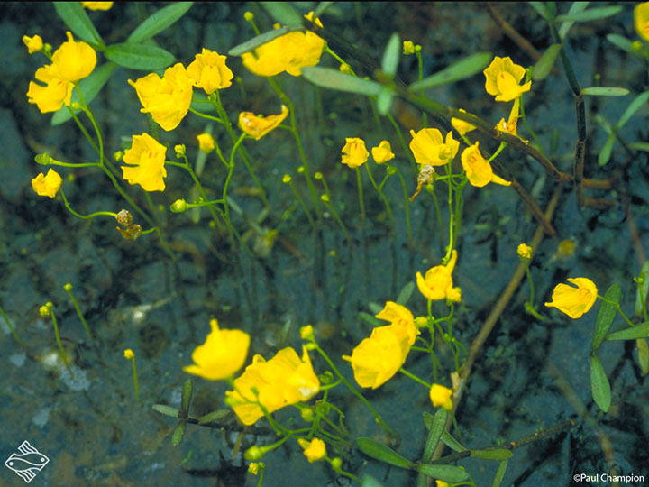une plante - ajonc  - 18 aout trouvée par Martine - Page 2 8-plan13