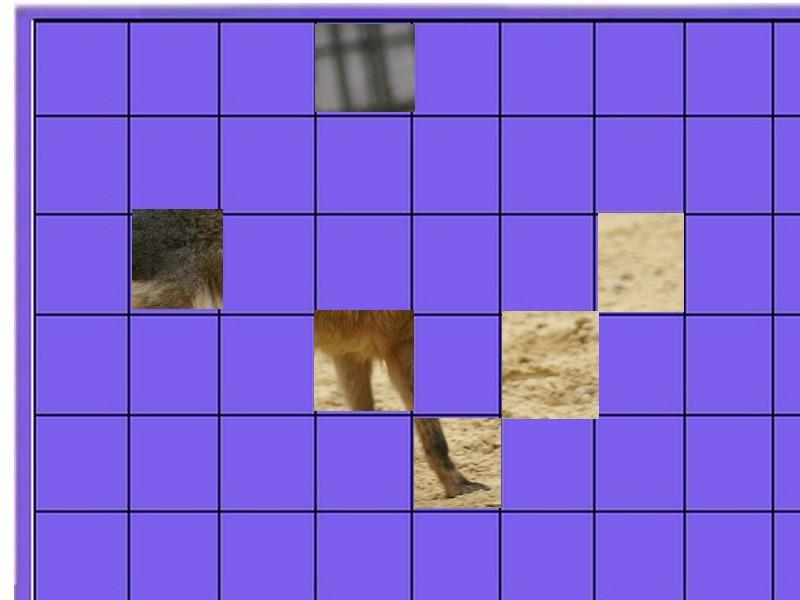 un animal - ajonc - 28 juillet trouvé par Martine Animal10