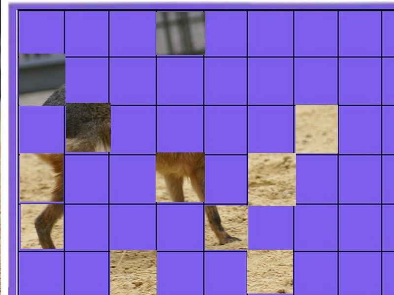 un animal - ajonc - 28 juillet trouvé par Martine Animal11