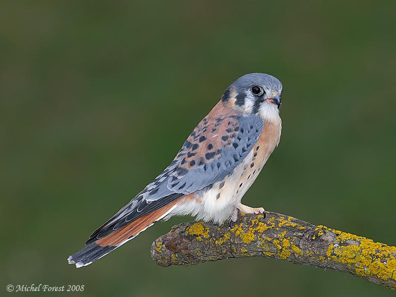 un oiseau - ajonc -le 28 juillet trouvé par Martin  Crecer10