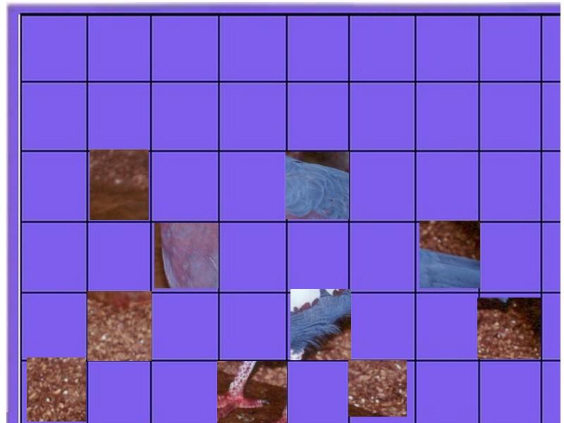 Oiseau n° 2 - ajonc- le 10 juin trouvé par Jovany Oiseau11