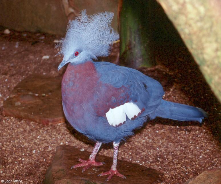 Oiseau n° 2 - ajonc- le 10 juin trouvé par Jovany Oiseau12