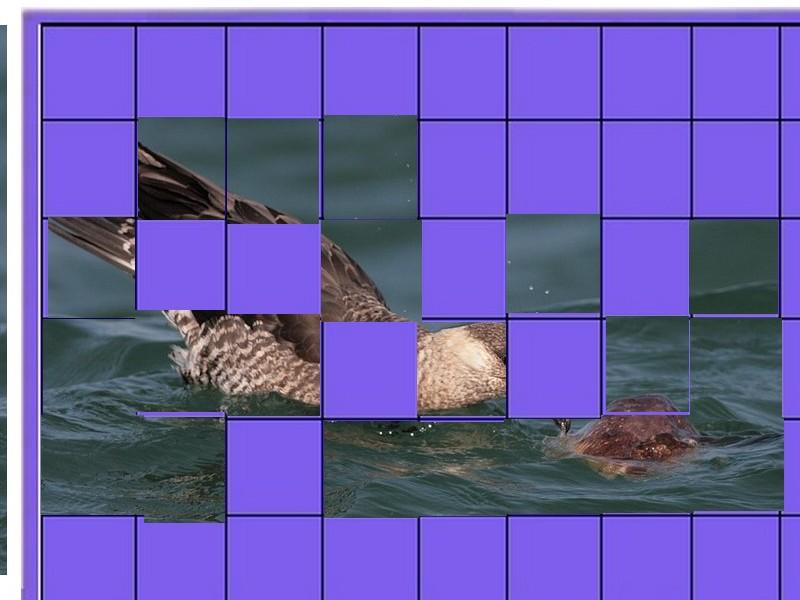 un oiseau à découvrir -ajonc- 5 août trouvé par Martin et Martine  Oiseau18