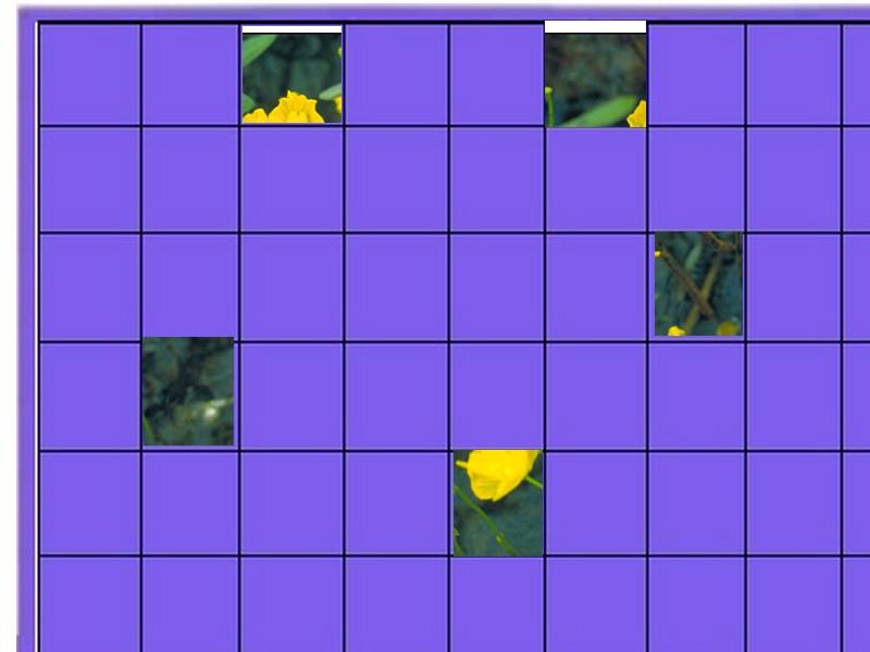 une plante - ajonc  - 18 aout trouvée par Martine Plante10