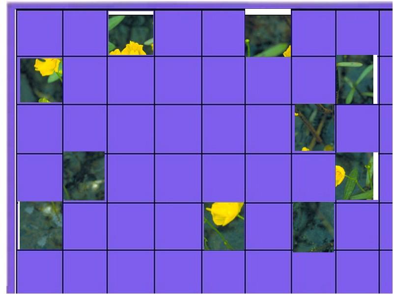 une plante - ajonc  - 18 aout trouvée par Martine Plante11