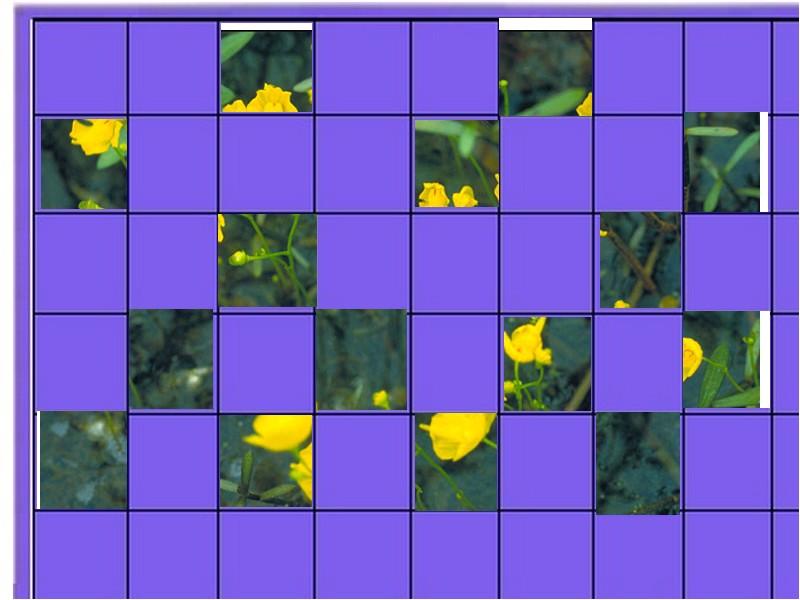 une plante - ajonc  - 18 aout trouvée par Martine Plante12