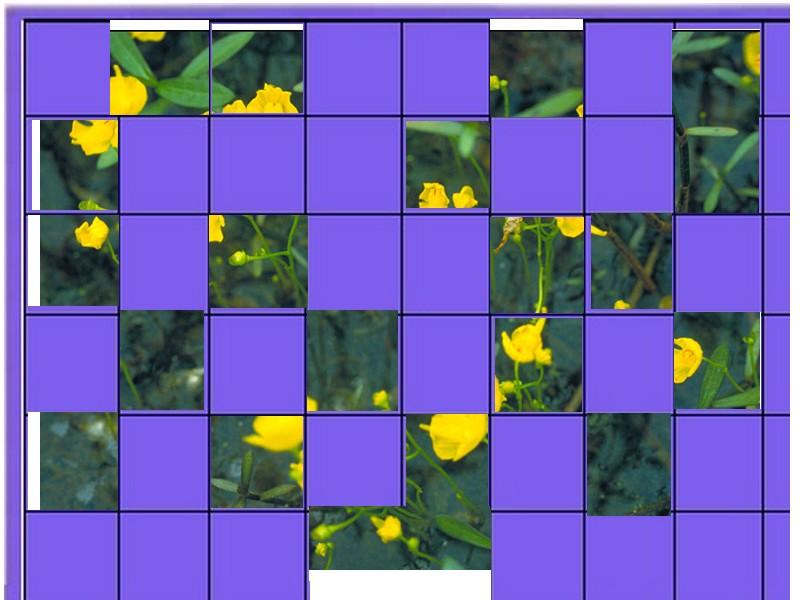 une plante - ajonc  - 18 aout trouvée par Martine Plante13