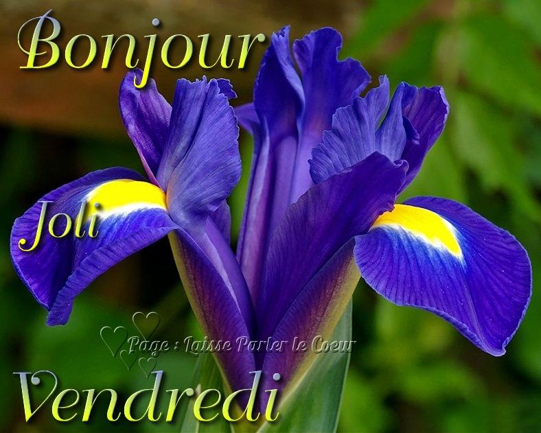 Bonjour du jour et bonsoir du soir - Page 2 Vendre10