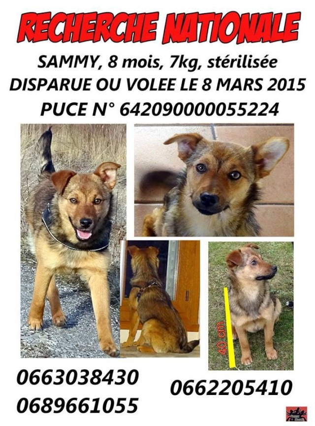 SAMMY est perdue depuis le 8 mars : secteur BOURGOIN JALLIEU 38 1314