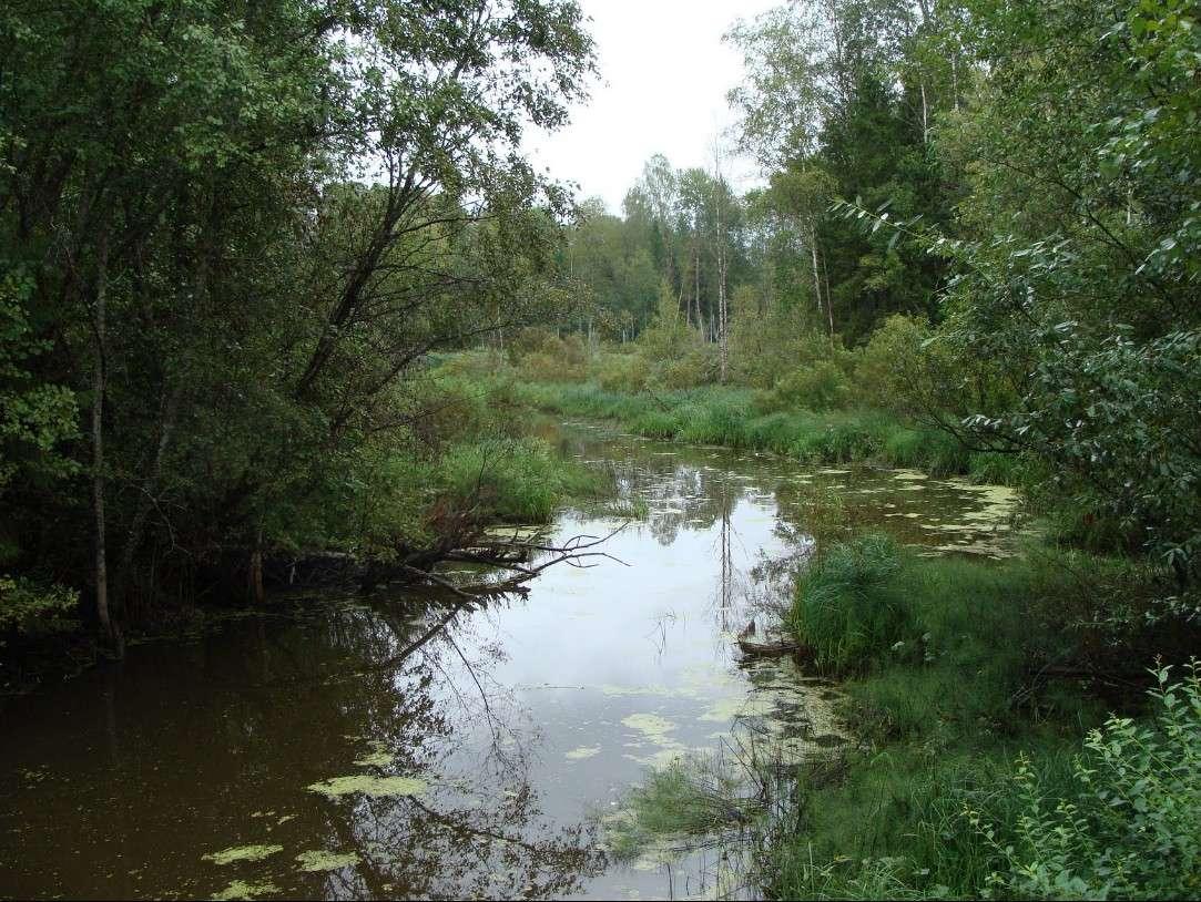 La source de la Volga - Voronovo - Russie 2015-035