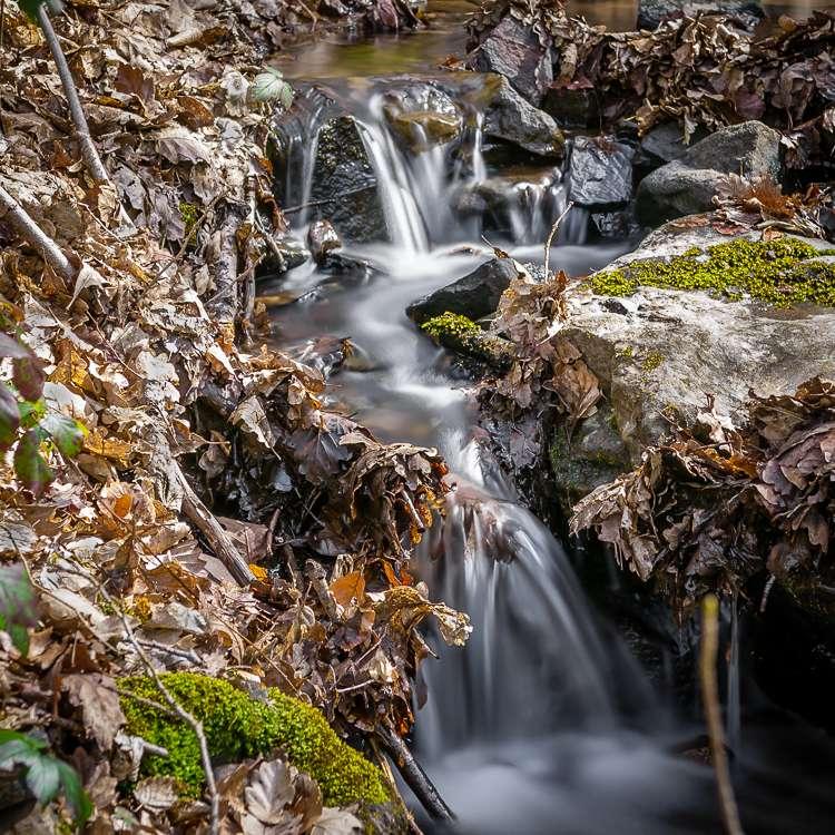 Petite cascade parmi les feuilles... 036_ca10