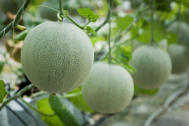 Loại trái cây mang tới may mắn cho 12 con giáp 00015010