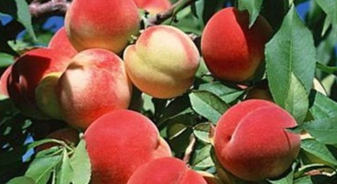 Loại trái cây mang tới may mắn cho 12 con giáp 13629610