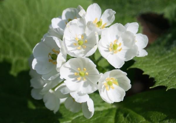 Kỳ lạ loài hoa trắng trong suốt khi trời mưa 15071717