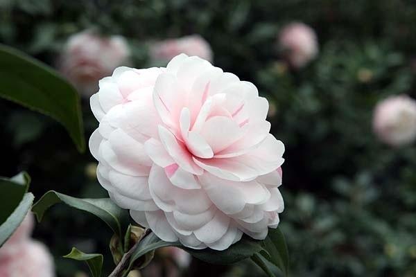 Loài hoa đem lại may mắn cho 12 cung Hoàng đạo 56342810