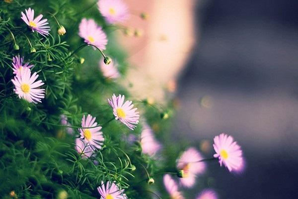Loài hoa đem lại may mắn cho 12 cung Hoàng đạo A3045310