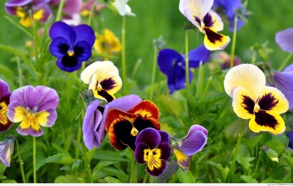 Loài hoa đem lại may mắn cho 12 cung Hoàng đạo Anh-de30