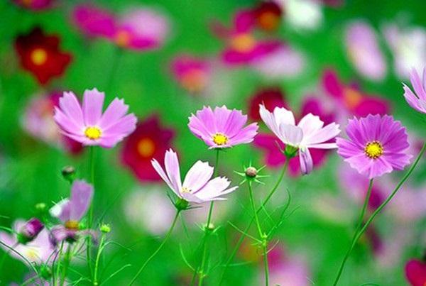 Loài hoa đem lại may mắn cho 12 cung Hoàng đạo Bong-b10