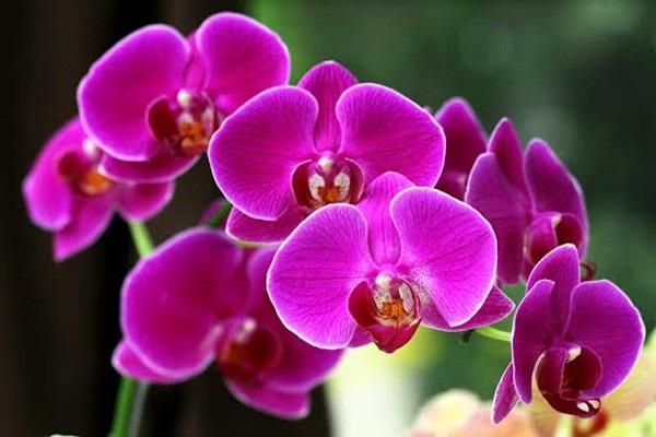 Loài hoa đem lại may mắn cho 12 cung Hoàng đạo Ctr-db10