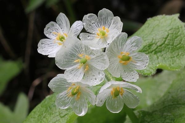 Loài hoa đem lại may mắn cho 12 cung Hoàng đạo Diep-h10