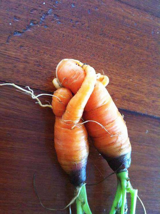 Những hình ảnh hài hước về rau củ Fruits10
