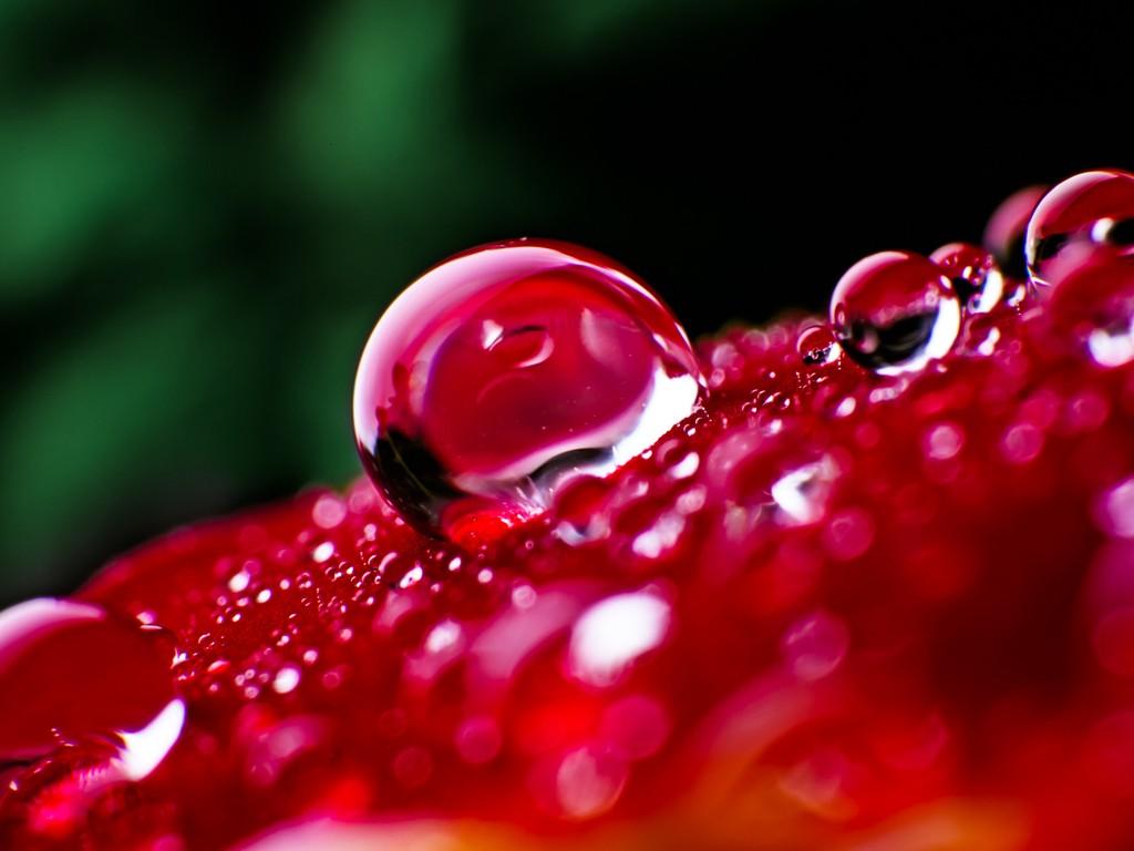 Giọt Nước Trên Hoa  Hinh-126