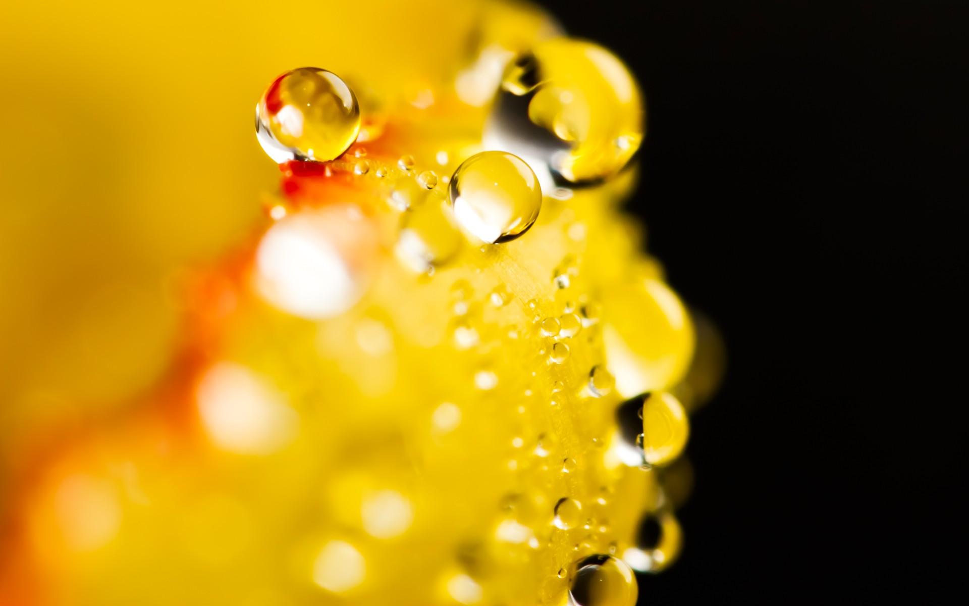 Giọt Nước Trên Hoa  Hinh-129