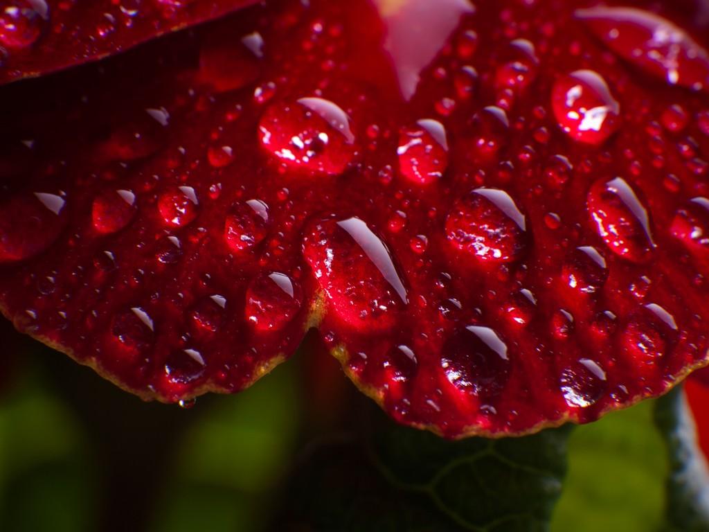 Giọt Nước Trên Hoa  Hinh-132