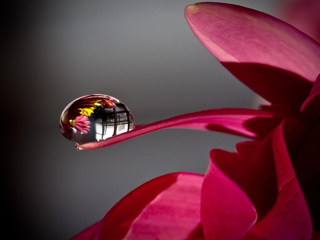 Giọt Nước Trên Hoa  Hinh-134
