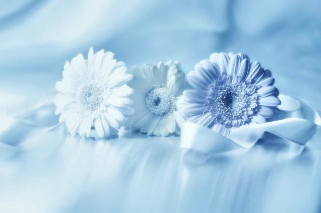 Những Cánh Hoa Đẹp - Lafugue Logos Hinh-a50