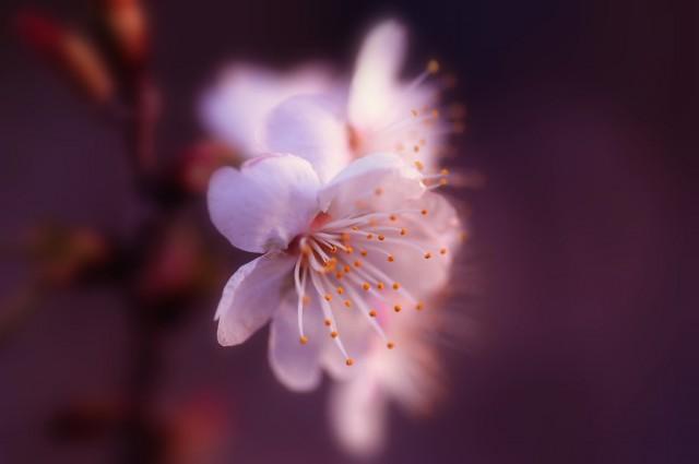 Những Cánh Hoa Đẹp - Lafugue Logos Hinh-a63