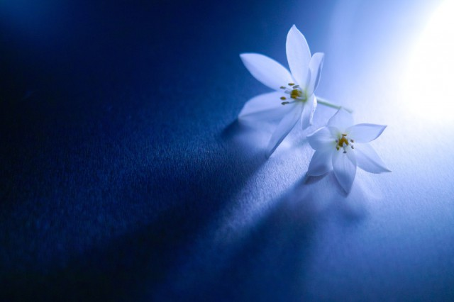 Những Cánh Hoa Đẹp - Lafugue Logos Hinh-a64