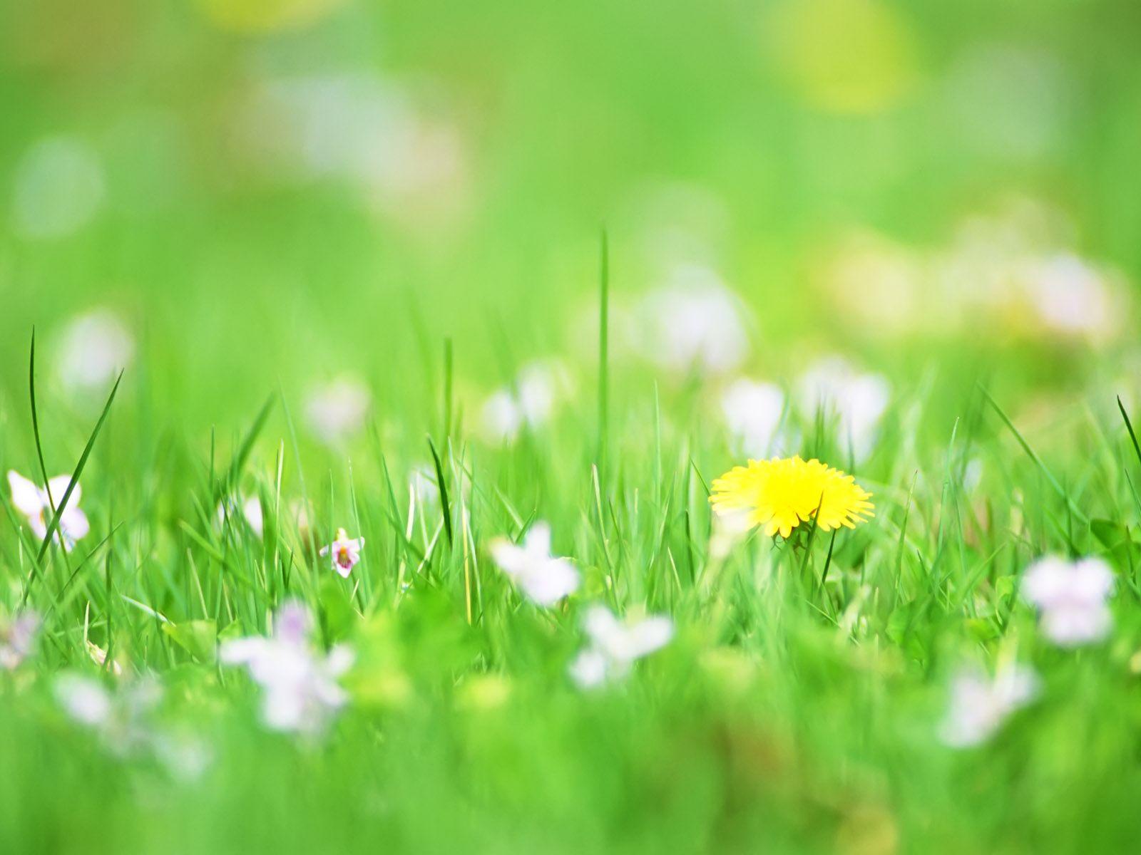 Hoa cỏ dại Hinh-n22
